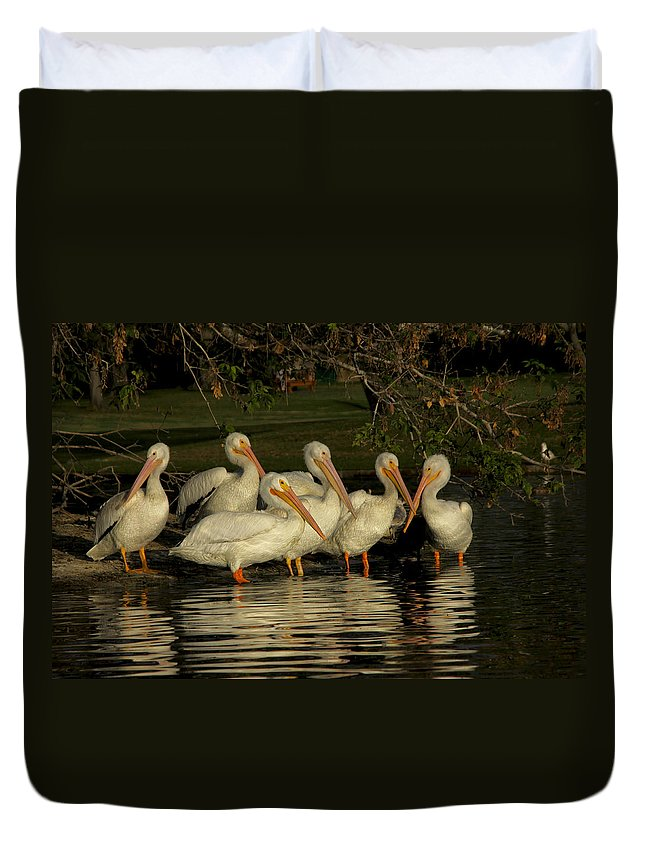 White Pelicans Duvet Cover featuring the photograph Group Of White Pelicans by Diana Haronis