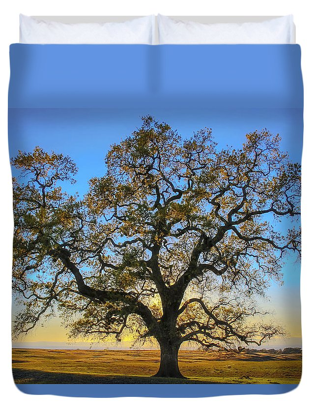 Oak Tree Duvet Cover featuring the photograph Growing In Life by Wes Jimerson