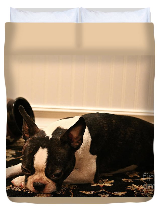 Animal Duvet Cover featuring the photograph Guilt by Susan Herber