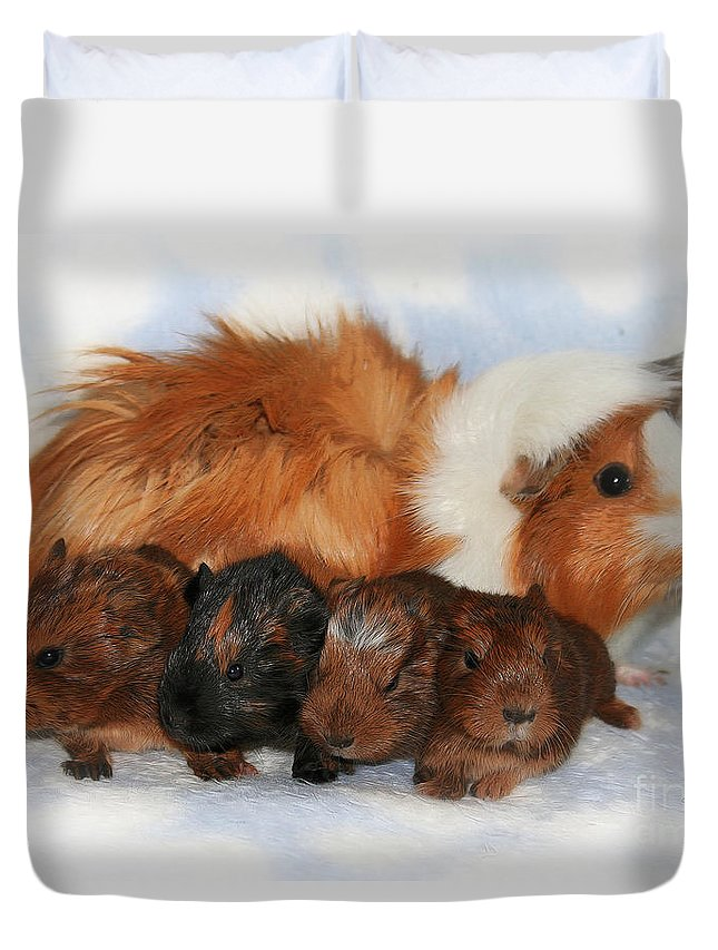 Photo Duvet Cover featuring the photograph Guinea Pig Family by Jutta Maria Pusl
