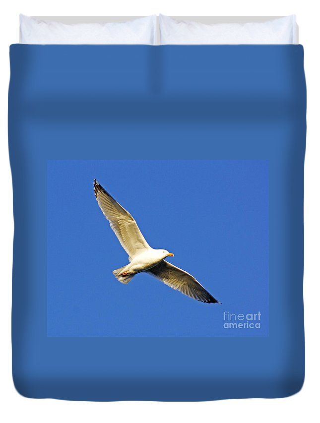 Gull Duvet Cover featuring the photograph Gulleron by Joe Geraci