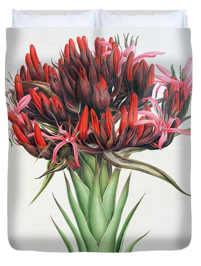 Still-life Duvet Cover featuring the painting Gymea Lily by English School