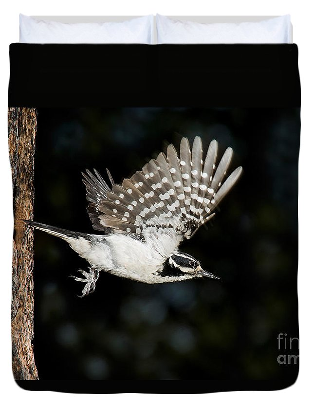 Fauna Duvet Cover featuring the photograph Hairy Woodpecker by Anthony Mercieca