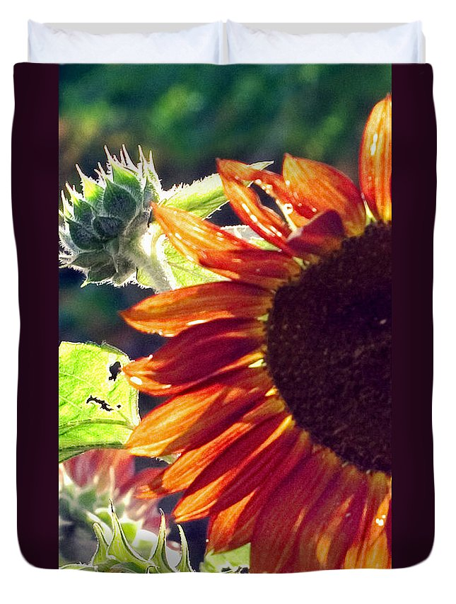 Sunflower Duvet Cover featuring the photograph Half Of A Sunflower by Madeline Ellis