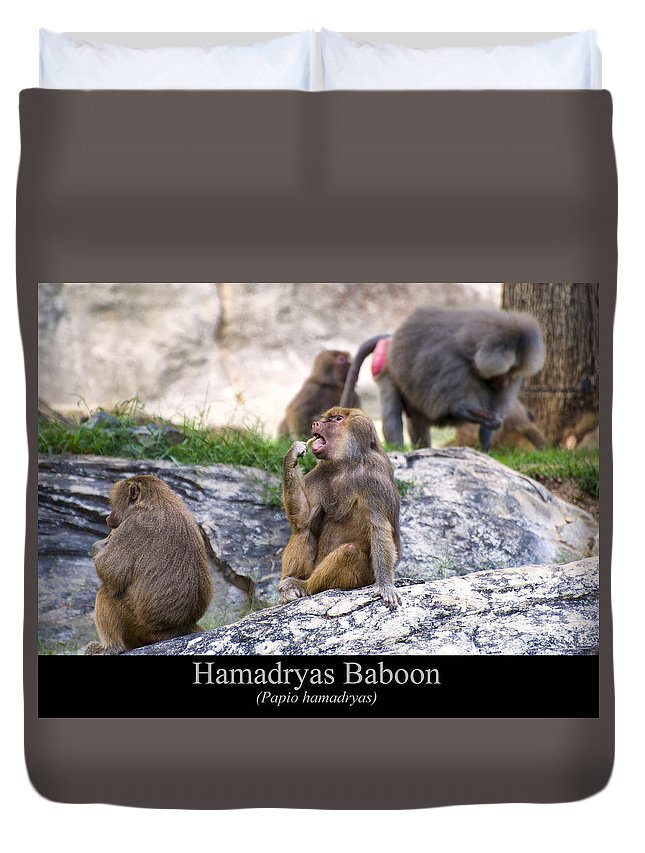 Class Room Posters Duvet Cover featuring the digital art Hamadryas Baboon by Chris Flees