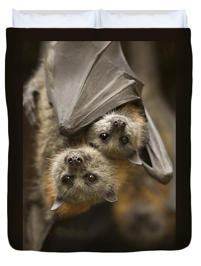 Bats Duvet Cover featuring the photograph Hang In There by Mike Dawson
