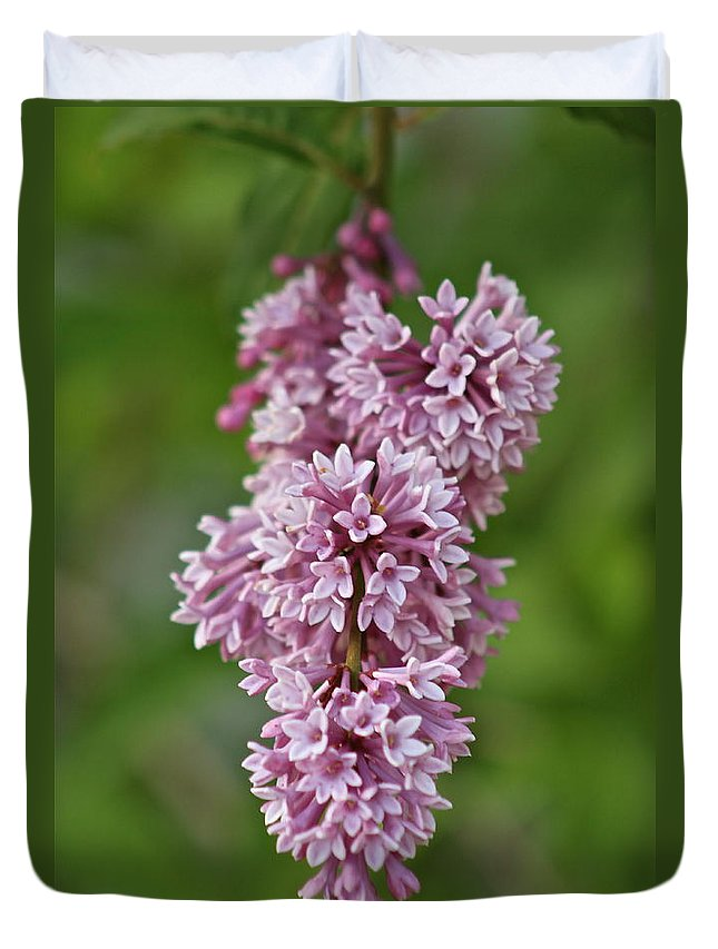Flower Duvet Cover featuring the photograph Hanging Lilac by Rick Monyahan
