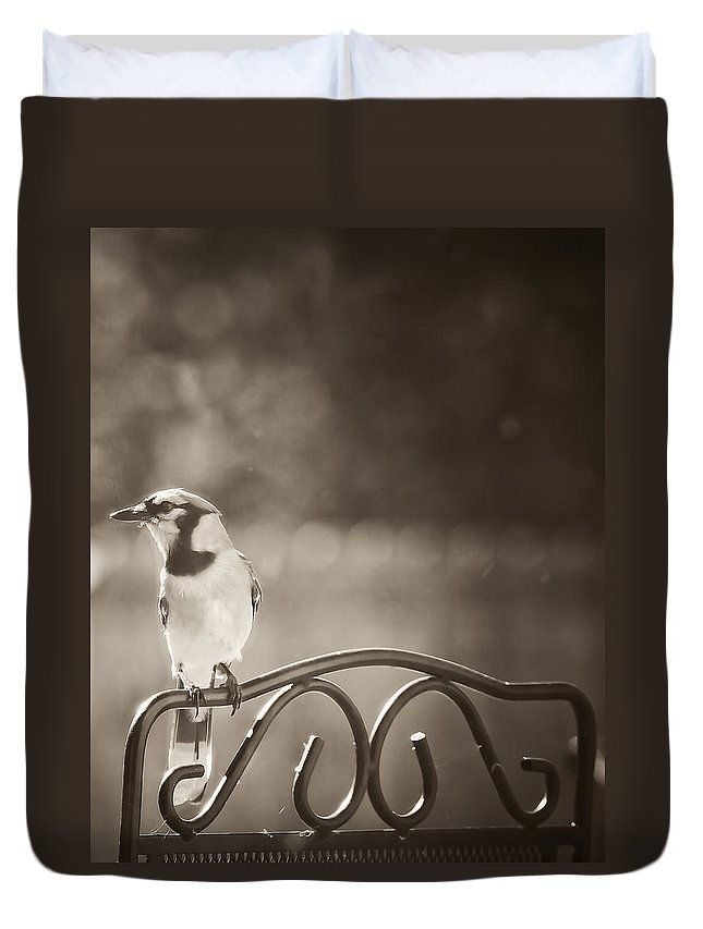 Blue Jay Duvet Cover featuring the photograph Hanging Out In The Garden by Kim Henderson