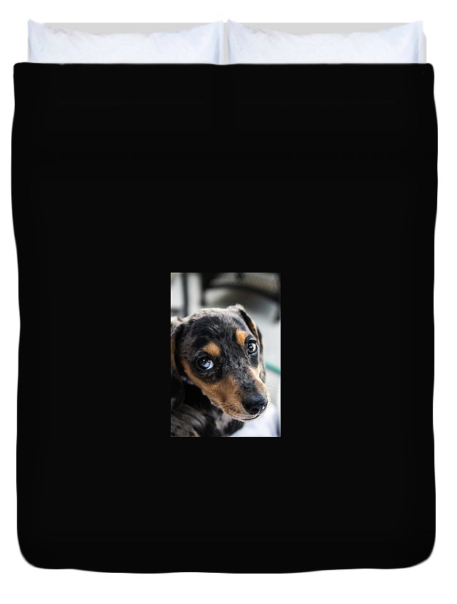 Dachshund Duvet Cover featuring the photograph Happy Dachshund by John Lee