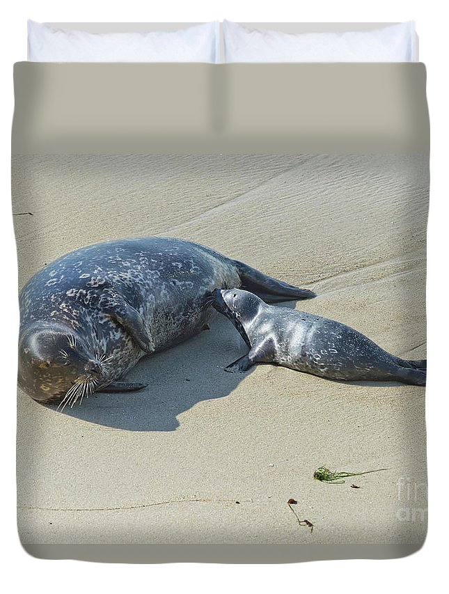 Harbor Seal Duvet Cover featuring the photograph Harbor Seal Suckling Young by Anthony Mercieca