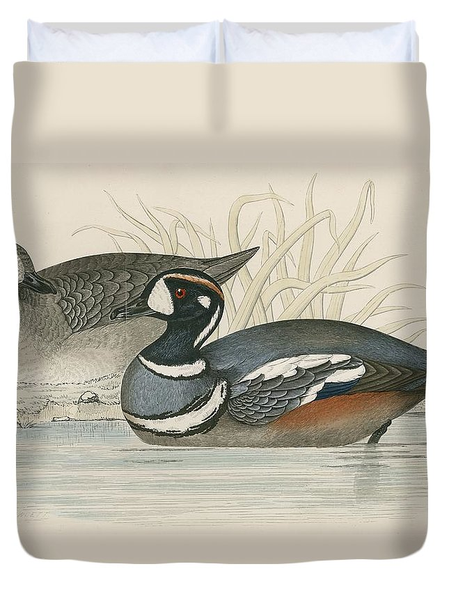 Birds Duvet Cover featuring the photograph Harlequin Duck by Beverley R. Morris