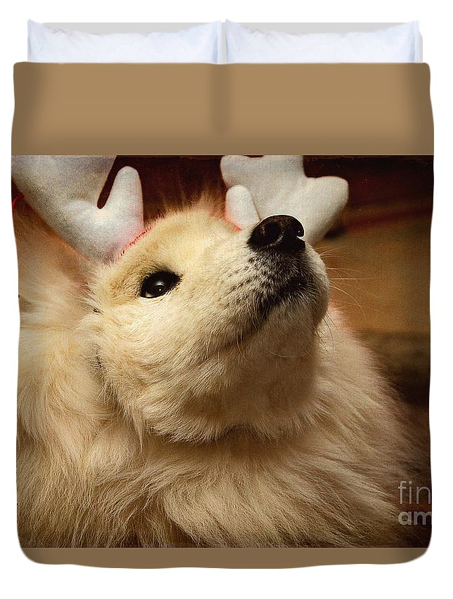 Christmas Duvet Cover featuring the photograph Have I Been A Good Doggie? by Lois Bryan