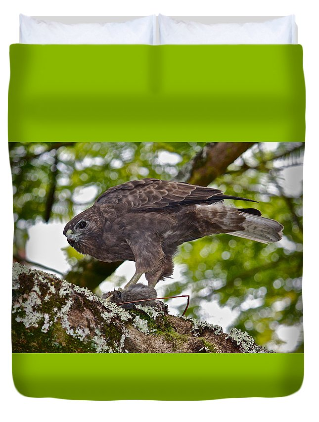 Buteo Solitarius Duvet Cover featuring the photograph Hawaiian Hawk With Mouse by Venetia Featherstone-Witty