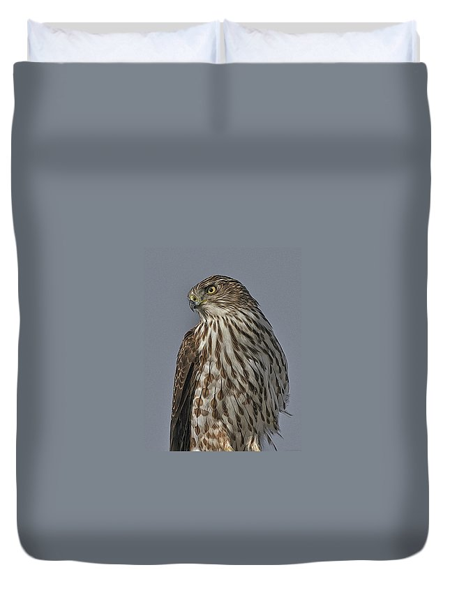 Bird Duvet Cover featuring the photograph Hawk Beauty On The Lookout by Leslie Reagan - Joy To The Wild Photos