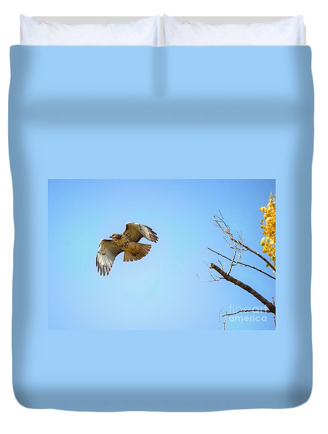 Hawk Duvet Cover featuring the photograph Hawk In Early October by M Dale