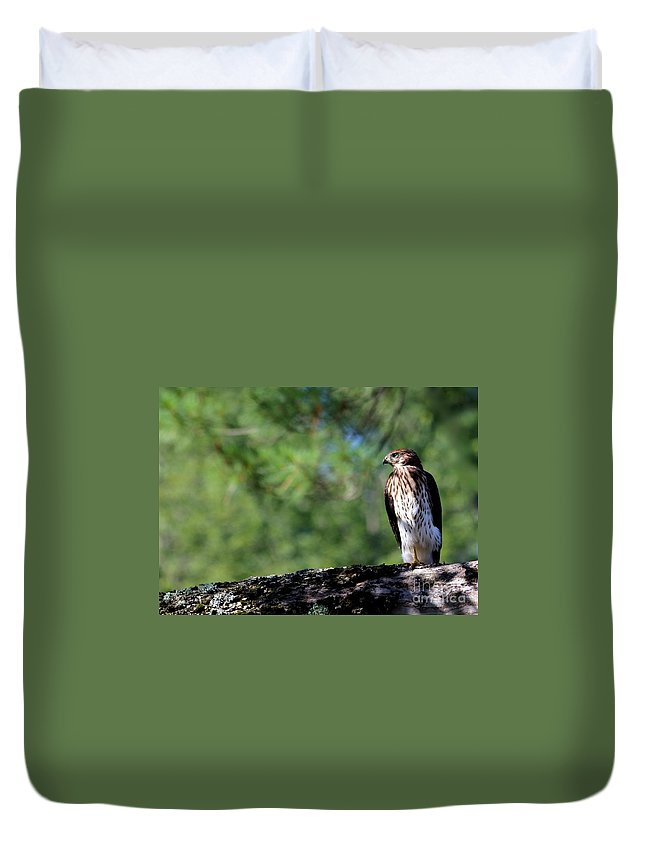 Hawk Duvet Cover featuring the photograph Hawk In Tree by Kenny Glotfelty