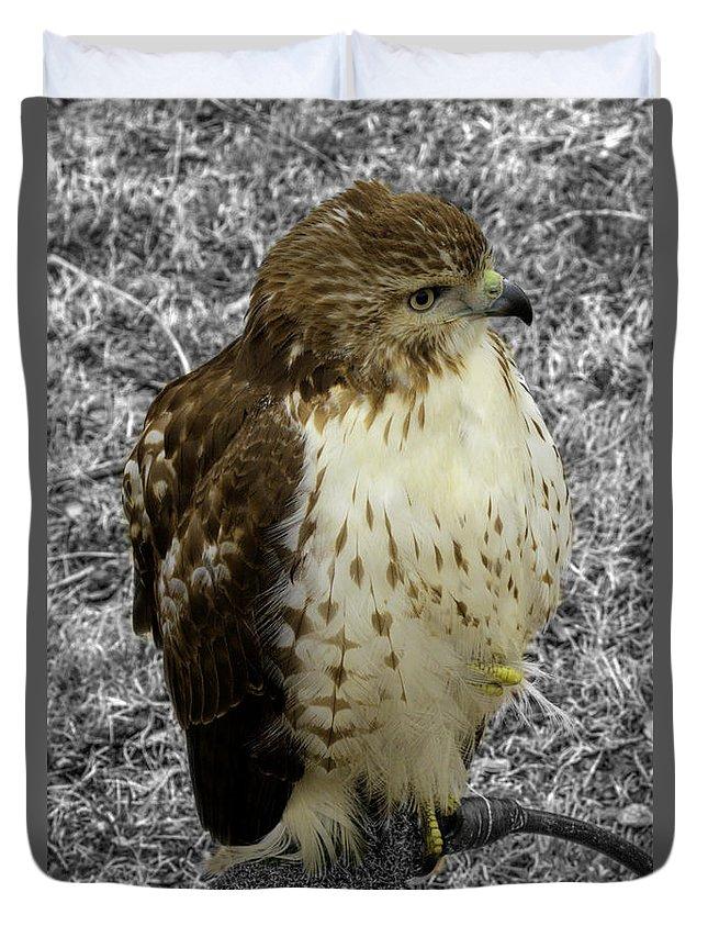 Hawk Duvet Cover featuring the photograph Hawk V3c by John Straton