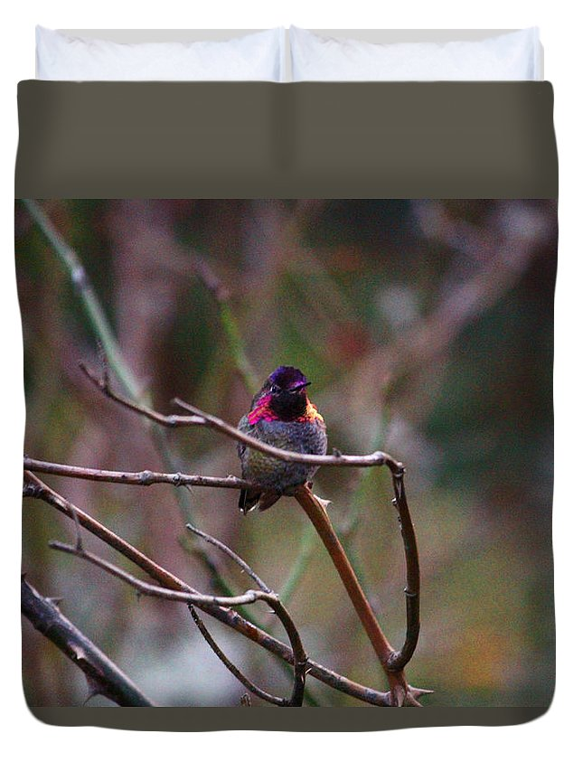 Animals Duvet Cover featuring the photograph He Flashed Me With Fuchsia by Kym Backland