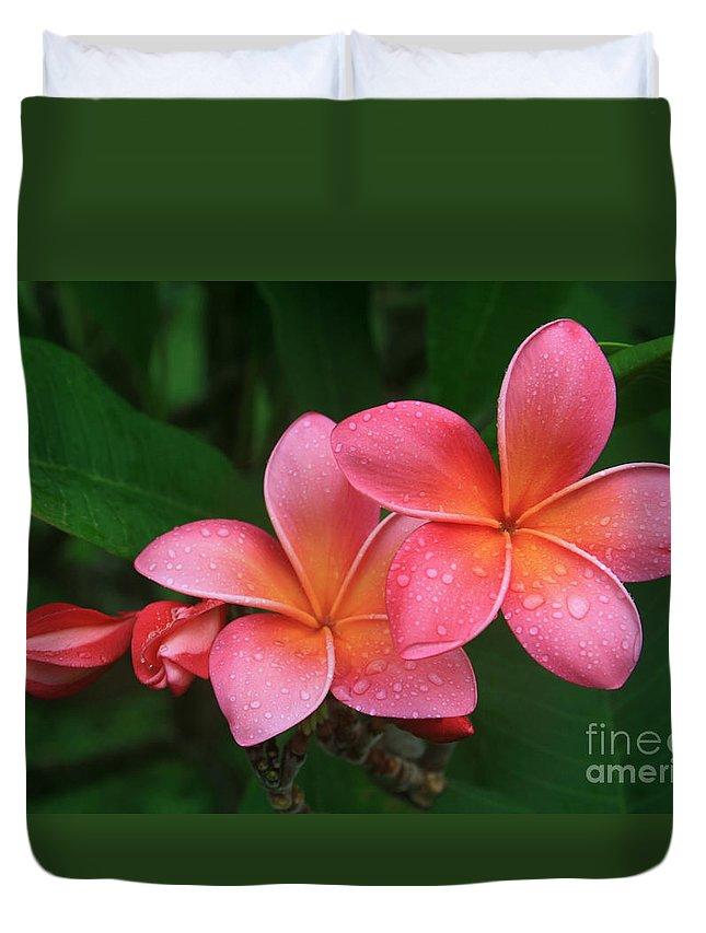 Pink Plumeria Duvet Cover featuring the photograph He Pua Laha Ole Hau Oli Hau Oli Oli Pua Melia Hae Maui Hawaii Tropical Plumeria by Sharon Mau