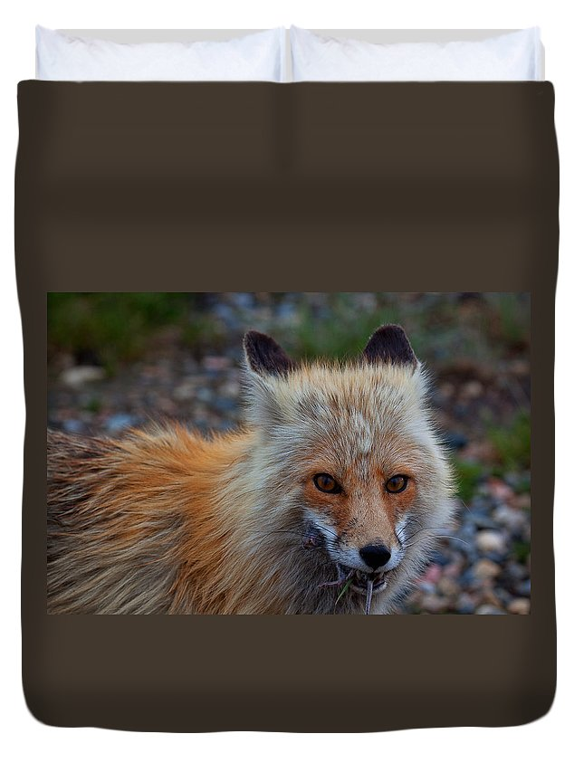 Fox Duvet Cover featuring the photograph Heads Or Tails by Jim Garrison