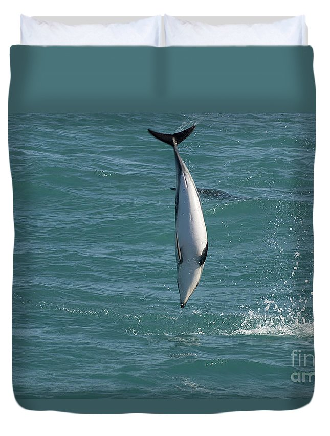 Hector Dolphin Diving In New Zealand Duvet Cover featuring the photograph Hector Dolphin Diving by Loriannah Hespe