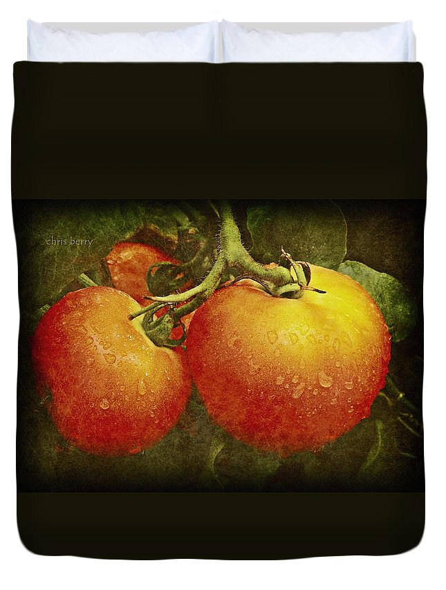 Amish Duvet Cover featuring the photograph Heirloom Tomatoes On The Vine by Chris Berry