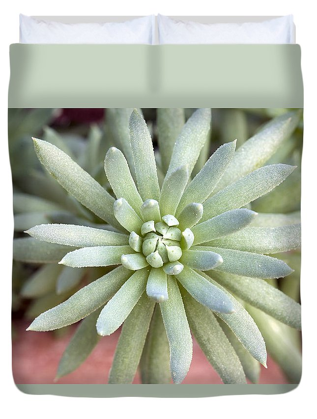 Hen Duvet Cover featuring the photograph Hen And Chick Miniature Succulent Macro by Jit Lim