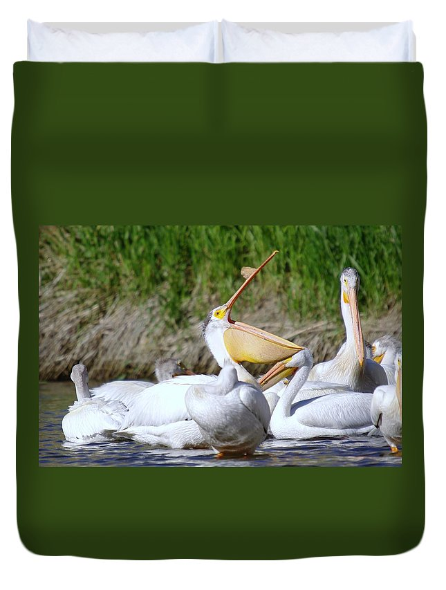 Pelicans Duvet Cover featuring the photograph Here Fishy Fishy Fishy by Jeff Swan