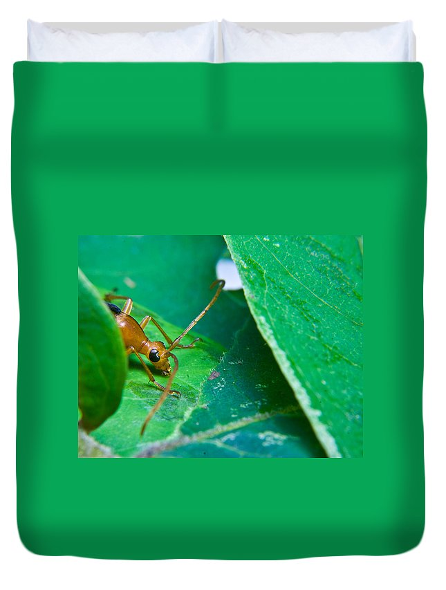 Beetle Duvet Cover featuring the photograph Here's Looking At You by Douglas Barnett