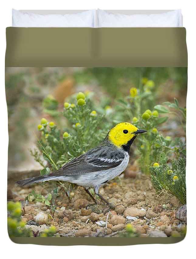 Hermit Warbler Duvet Cover featuring the photograph Hermit Warbler by Anthony Mercieca