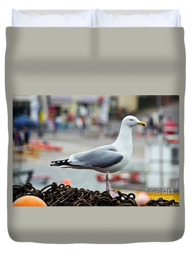 Herring Gull Duvet Cover featuring the photograph Herring Gull At The Harbour by Susie Peek