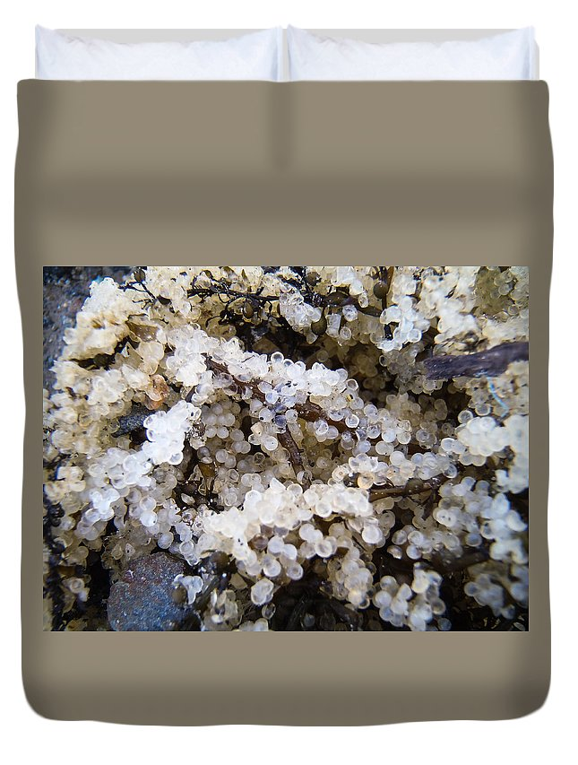 Seagulls Duvet Cover featuring the photograph Herring Roe by Roxy Hurtubise