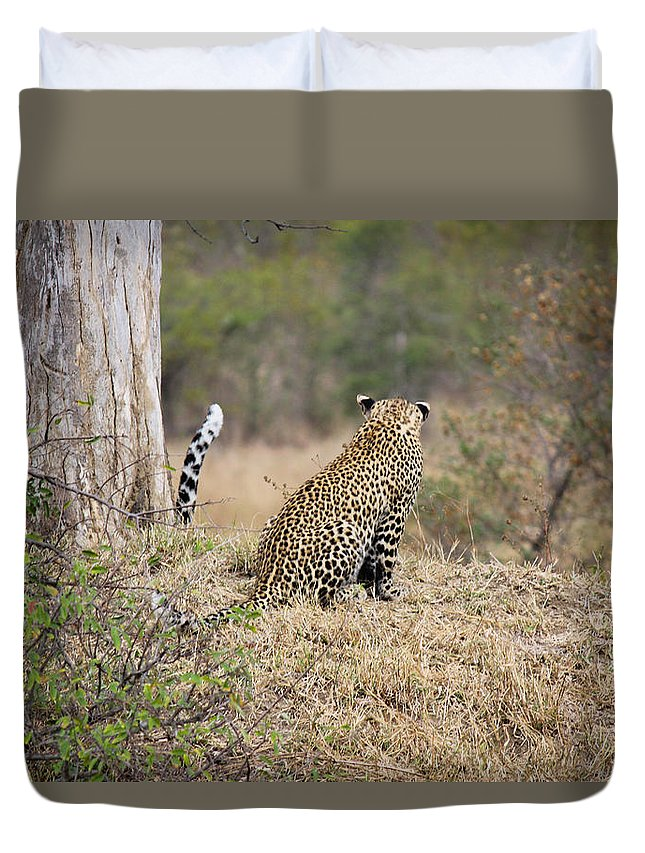 Leopard Duvet Cover featuring the photograph Hey Mom Where Are You Going by Christy Cox