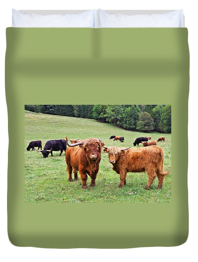 Agrar Duvet Cover featuring the photograph Highland Cattle by Ivan Slosar