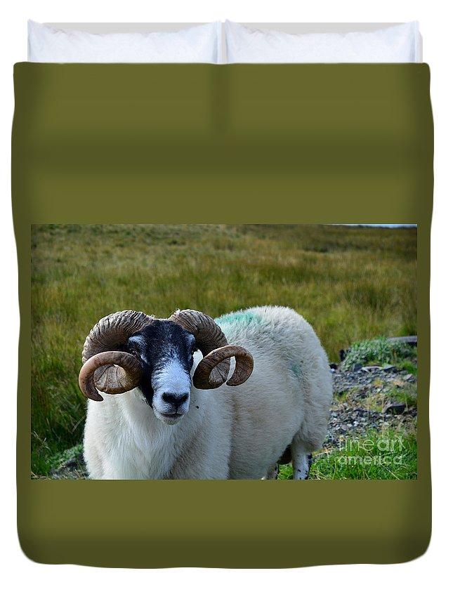 Sheep Duvet Cover featuring the photograph Highland Sheep by DejaVu Designs