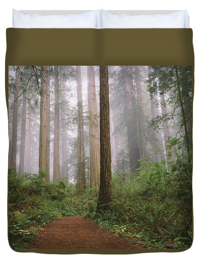 Tranquility Duvet Cover featuring the photograph Hiking Through Californias Redwoods by David Hoefler