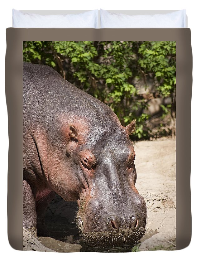 Zoo Duvet Cover featuring the photograph Hippo Hair 1 by Marilyn Hunt