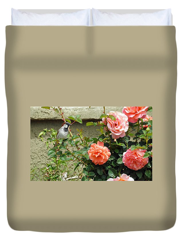 Sparrow Duvet Cover featuring the photograph His Eye Is On The Sparrow by Lynn Bauer