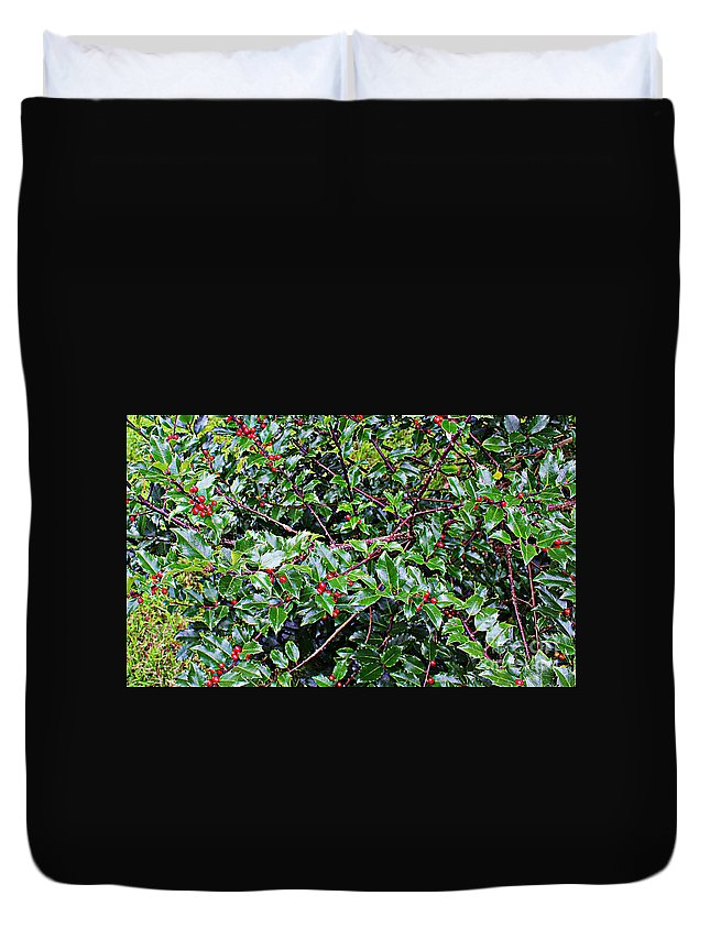 Holly Bush Duvet Cover featuring the photograph Holly Bush - by Barbara Griffin