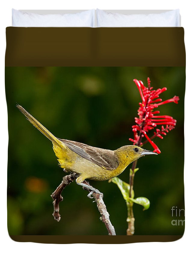 Hooded Oriole Duvet Cover featuring the photograph Hooded Oriole Female by Anthony Mercieca