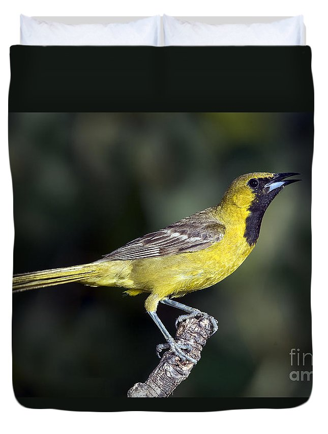 Hooded Oriole Duvet Cover featuring the photograph Hooded Oriole Juvenile by Anthony Mercieca