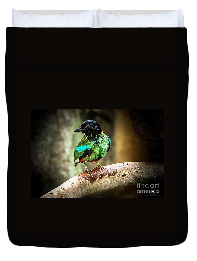 Bird Duvet Cover featuring the photograph Hooded Pitta by Grace Grogan