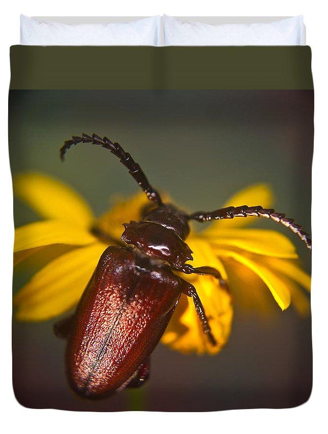 Horned Duvet Cover featuring the photograph Horned Beetle by Douglas Barnett
