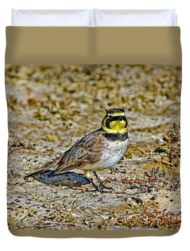 Animal Duvet Cover featuring the photograph Horned Lark Showing Horns by Anthony Mercieca
