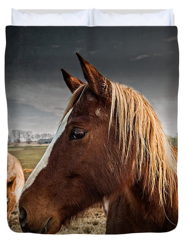 Adam Duvet Cover featuring the photograph Horse Composition by Brett Engle