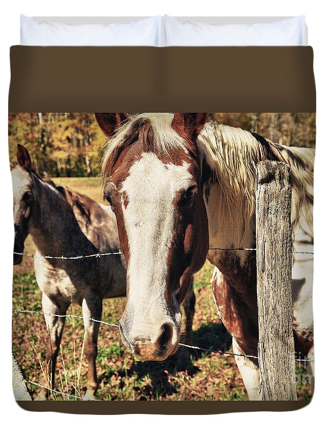 Animals Duvet Cover featuring the photograph Horses by Jill Lang