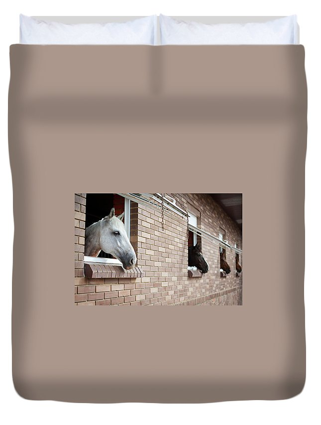 Horse Duvet Cover featuring the photograph Horses Looking From The Windows Of A by O sa