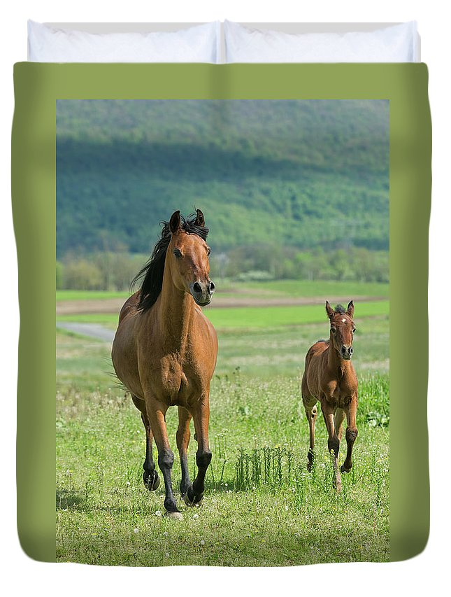 Horse Duvet Cover featuring the photograph Horses Running In Summer Pasture, Mare by Catnap72