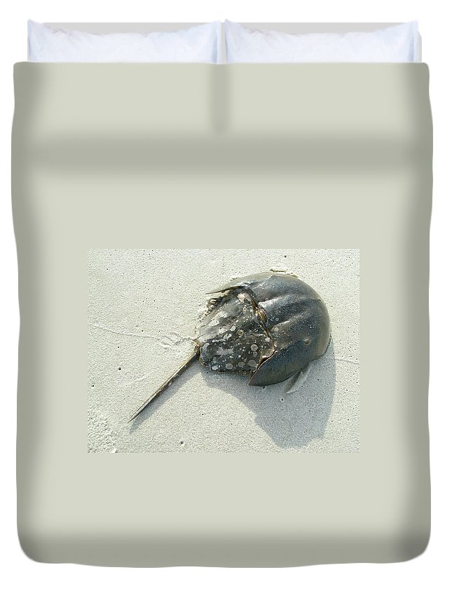 Crab Duvet Cover featuring the photograph Horseshoe Crab - Limulus Polyphemus by Mother Nature