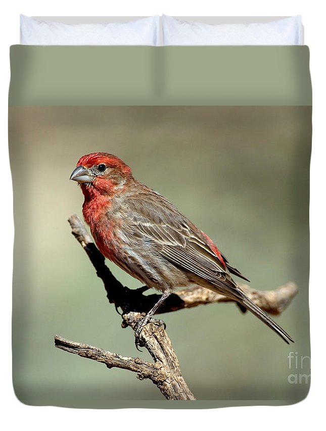 Fauna Duvet Cover featuring the photograph House Finch Carpodacus Mexicanus by Anthony Mercieca